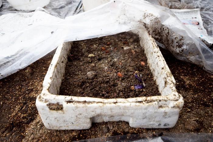 ミニトマトの育苗に挑戦中。ミニトマトは通常15℃あれば発芽するとのこと。
